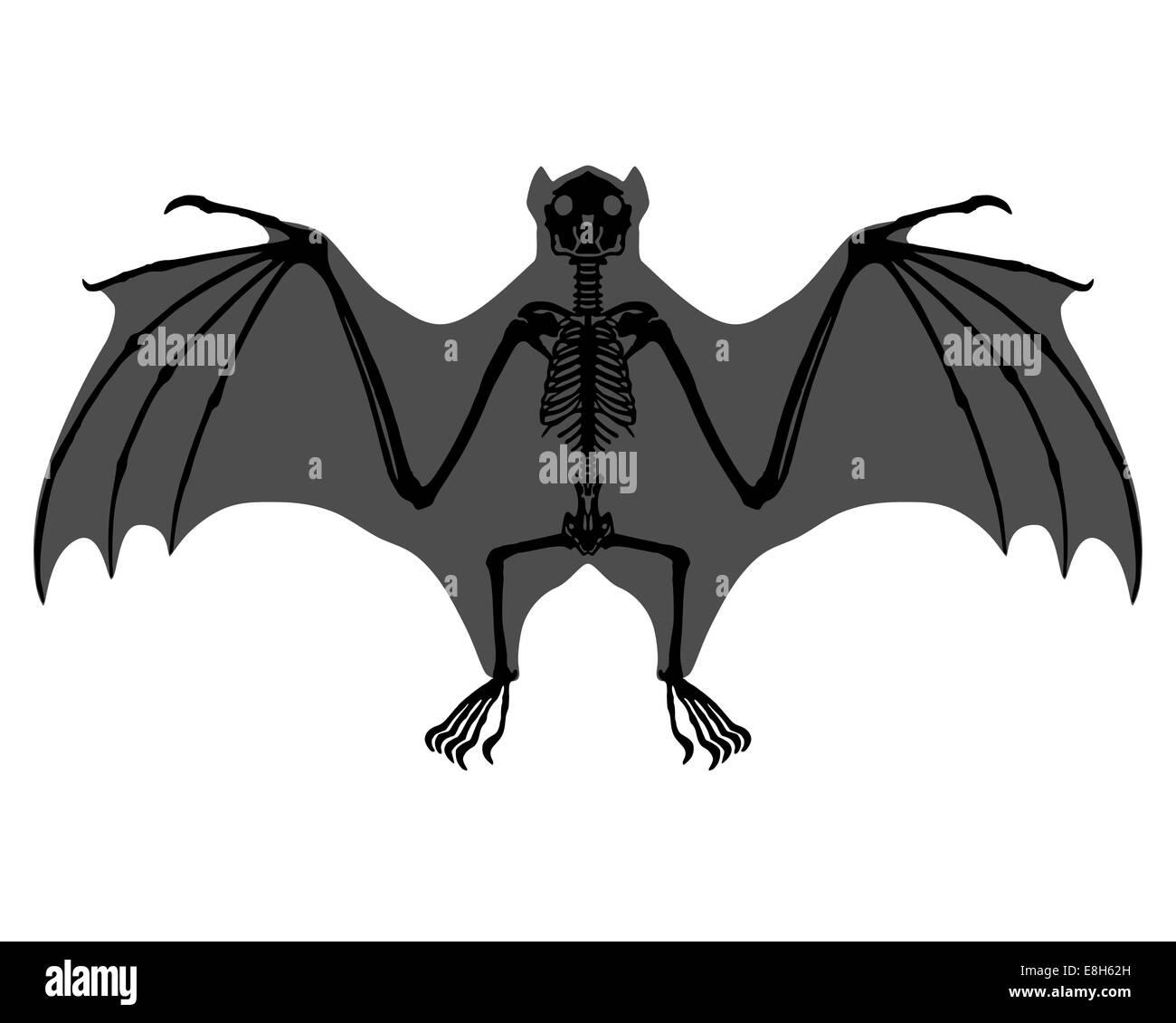 Bat Wing Anatomy Black and White Stock Photos & Images - Alamy