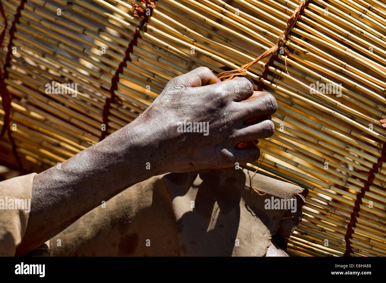 A man ties a knot on a traditional fish trap hand woven in Zambia's Bangweulu Wetlands - Stock Image
