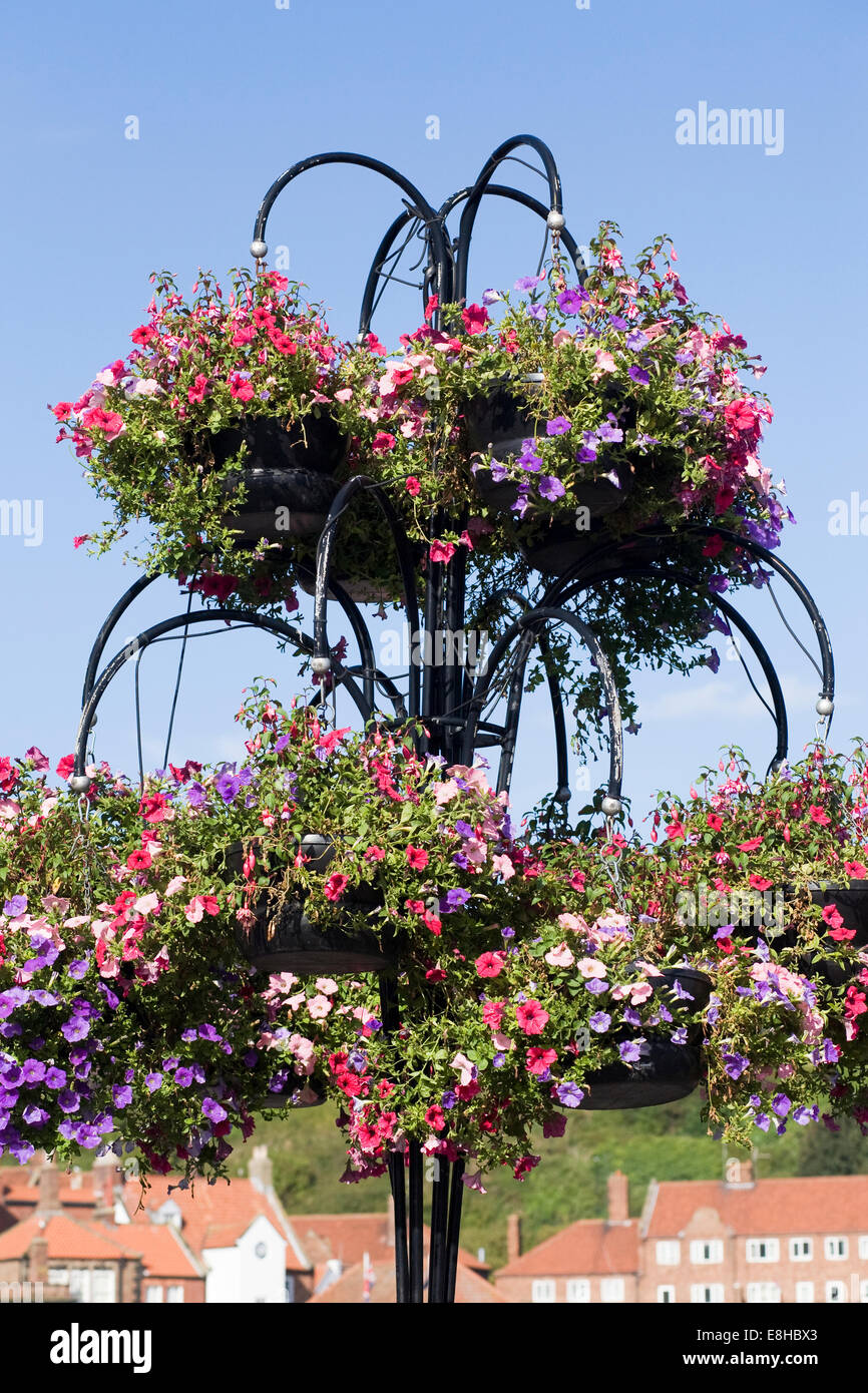 Colourful hanging baskets in Whitby Town. - Stock Image