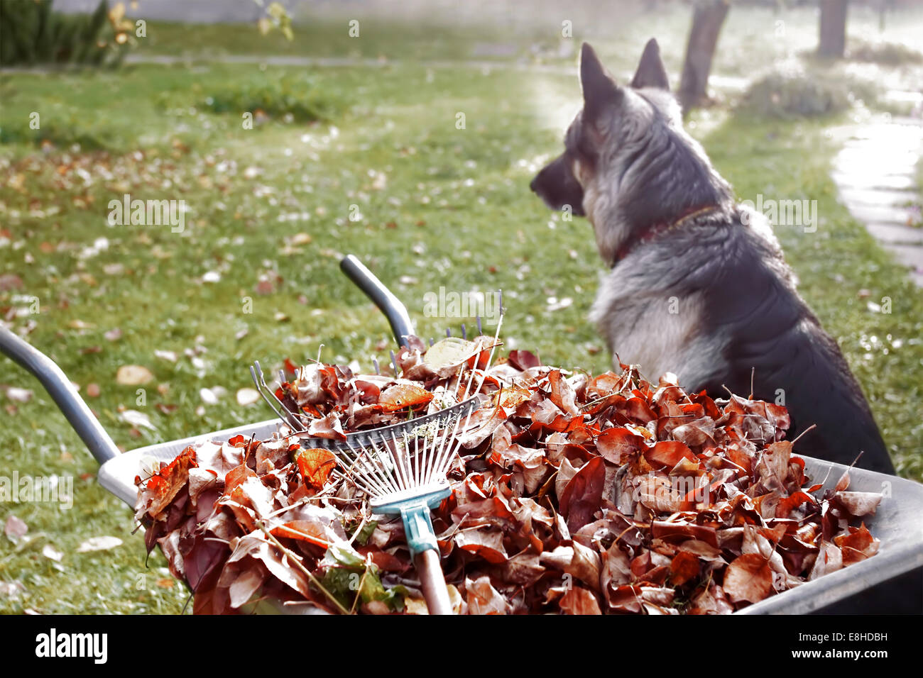 Dog Trolley Leaves Stock Photos & Dog Trolley Leaves Stock