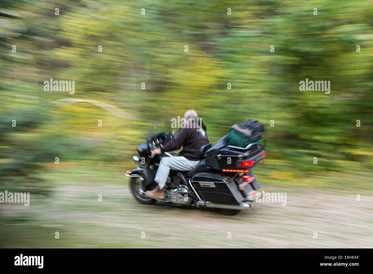 Mature Man Riding Harley Davidson Motorcycle in Spearfish Canyon, Black  Hills National Forest, SD