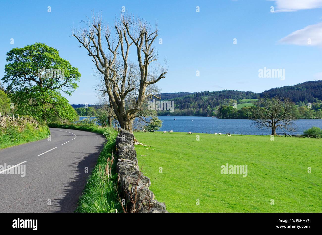 Esthwaite Water, Lake District National Park, Cumbria, England, UK - Stock Image
