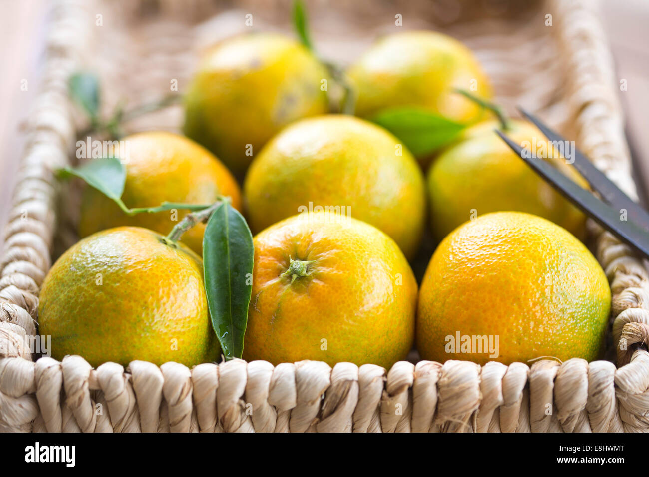 clementines in woven basket with scissors - Stock Image
