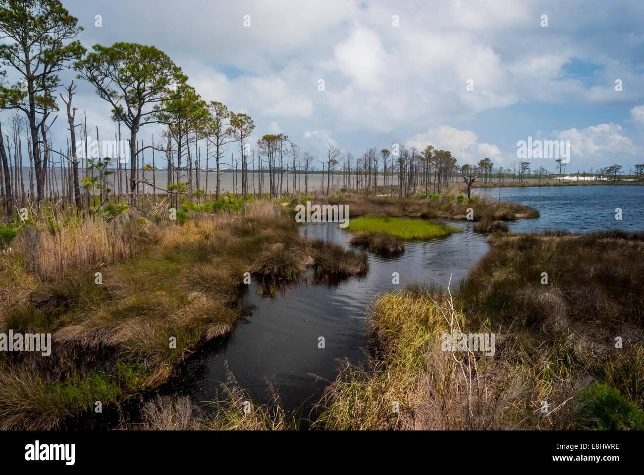 Gator Lake with Little Lagoon in the left background in Bon Secour National Wildlife Refuge, Alabama gulf coast, - Stock Image