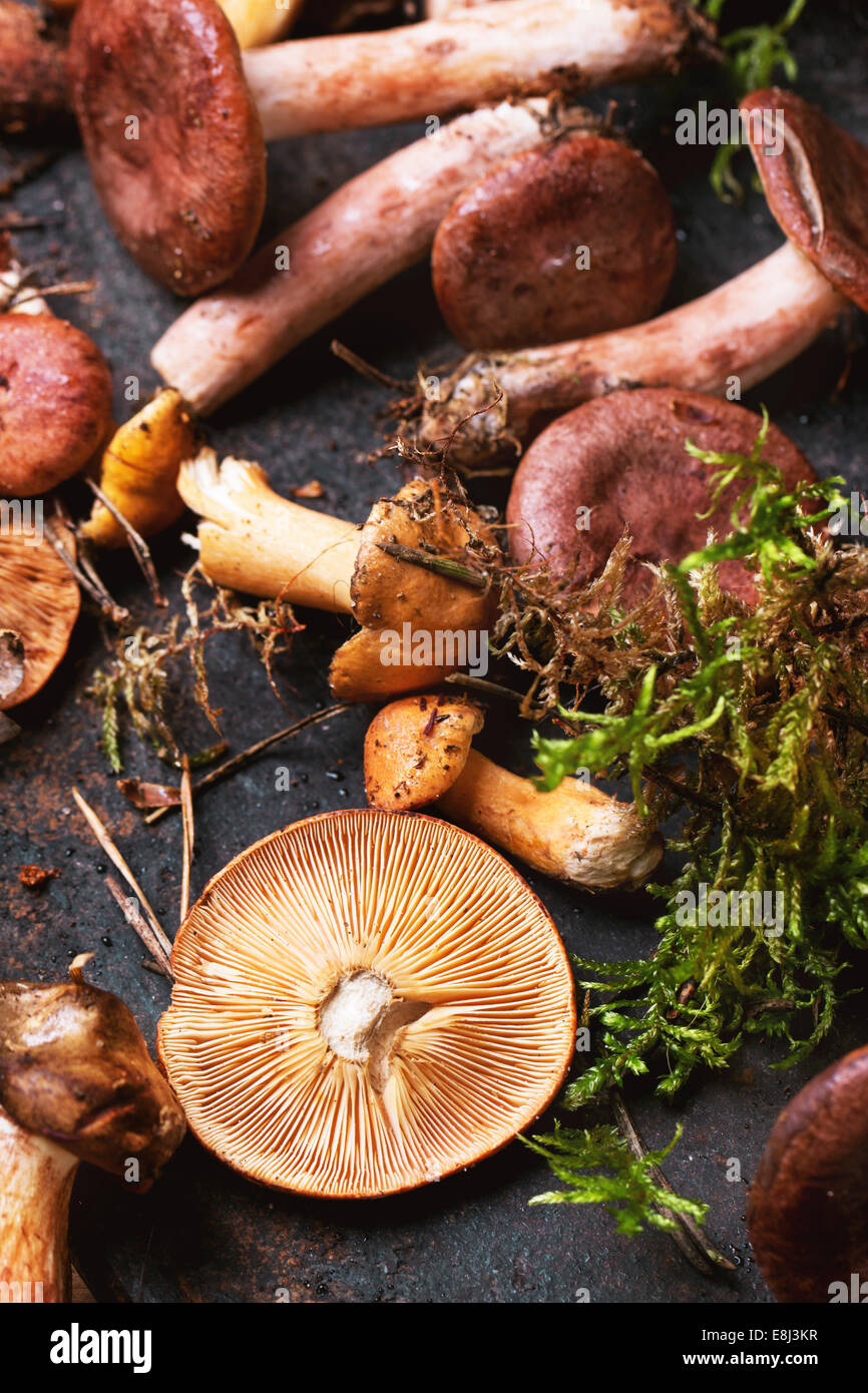Mix of forest mushrooms over old wooden table. - Stock Image