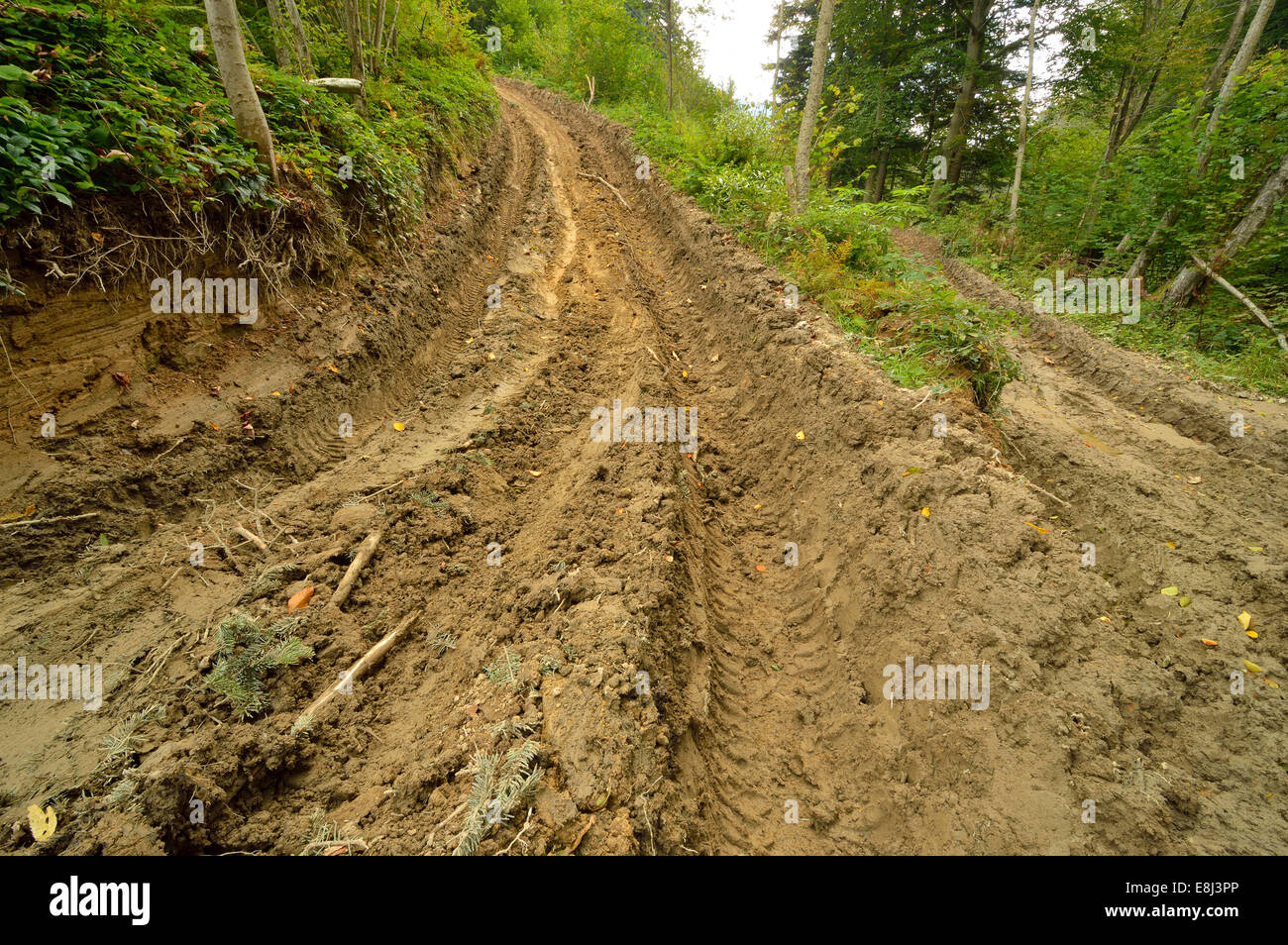 Extreme off road 4x4 muddy way through European forest. Poland. - Stock Image
