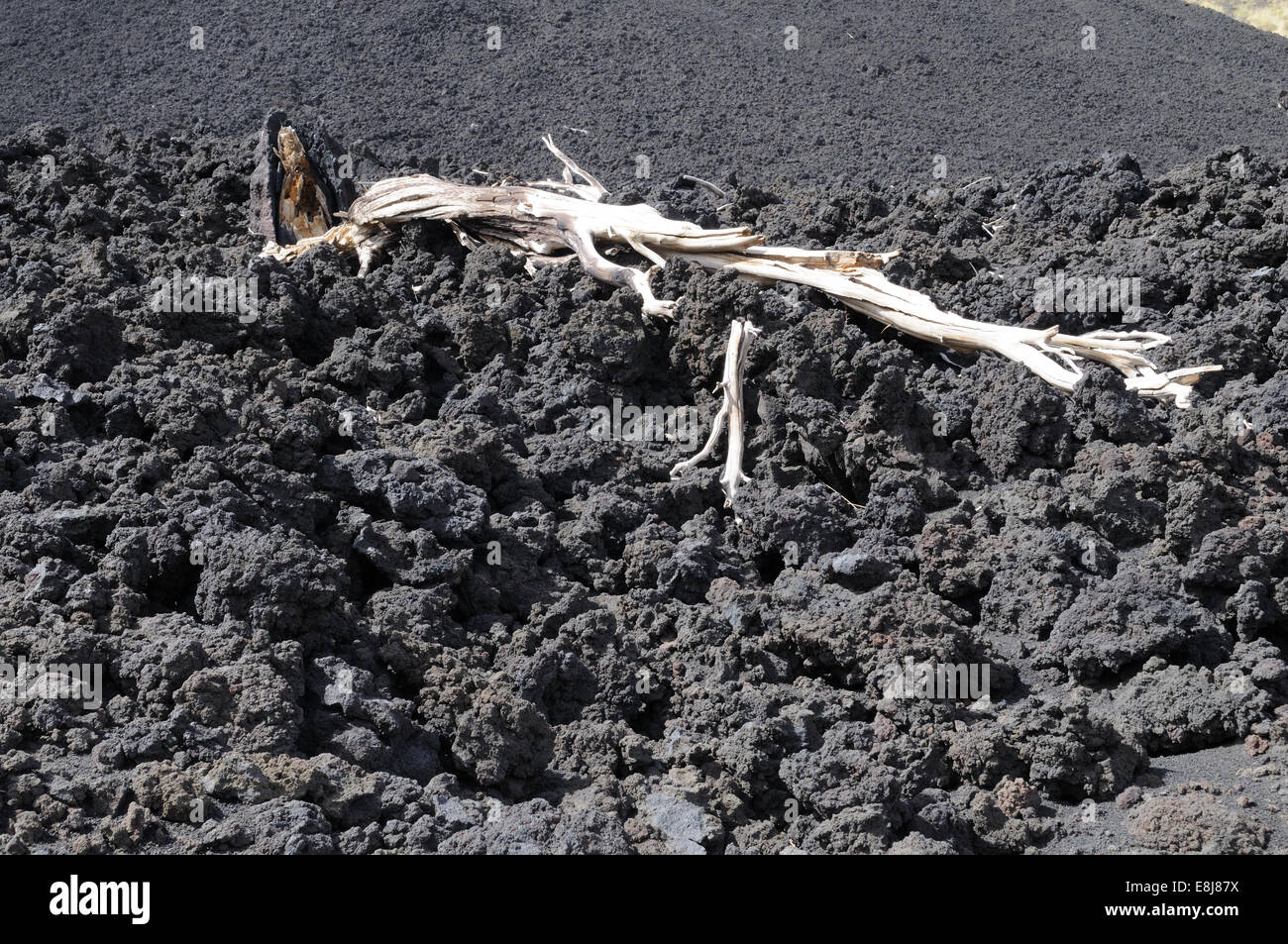 Dead tree and twisted lumps of lava on Mount Etna Sicily Italy - Stock Image
