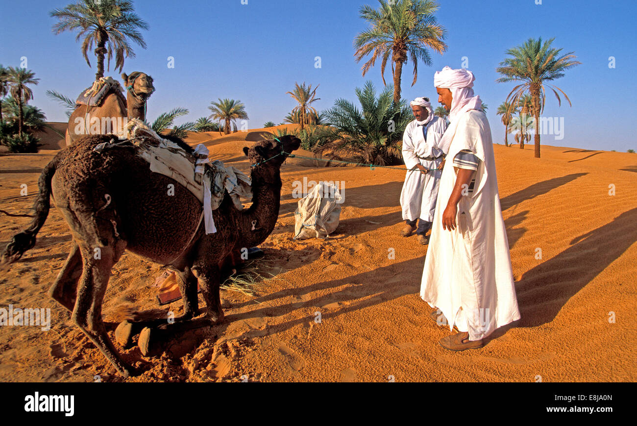 Tuareg population of Timimoun in Algeria. Preparation of a long distance hike in the desert with dromaderies (a - Stock Image