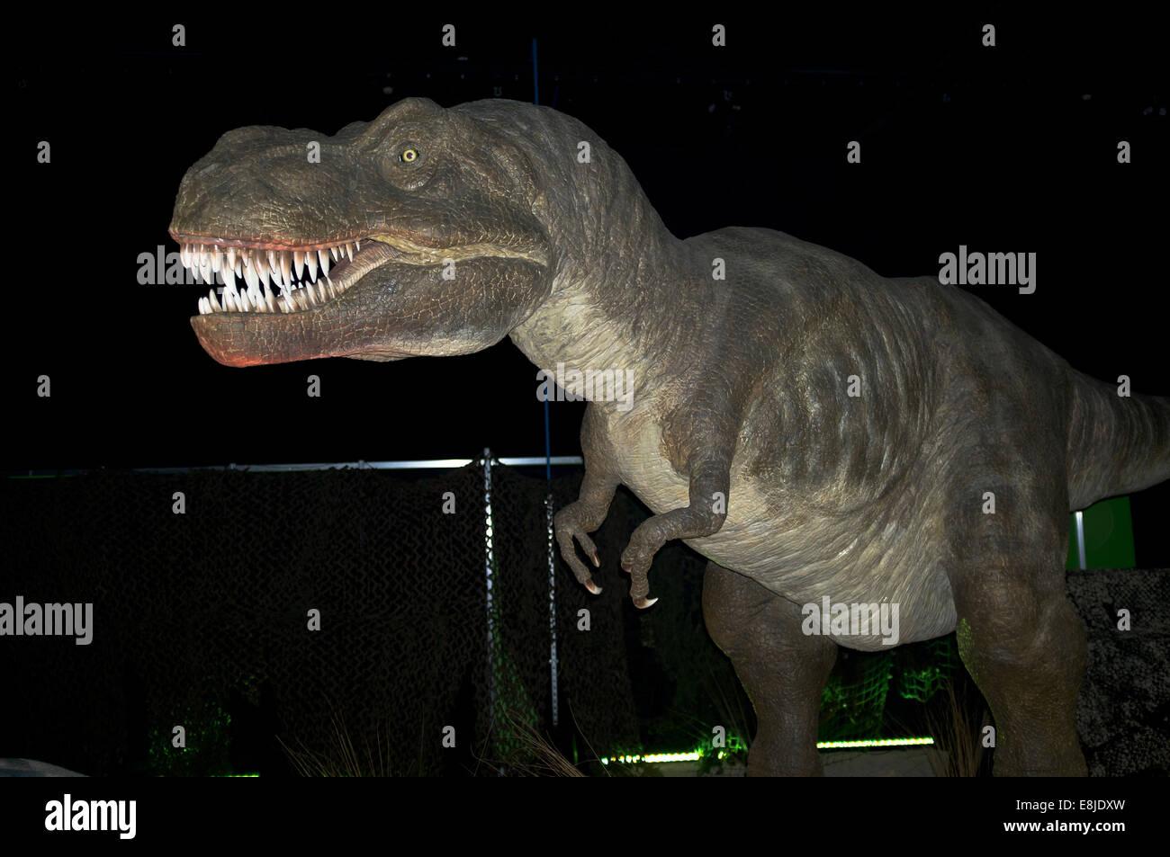 dh Tyrannosaurus rex PREHISTORIC ANIMAL Extinct T rex North American dinosaur bipedal carnivore - Stock Image