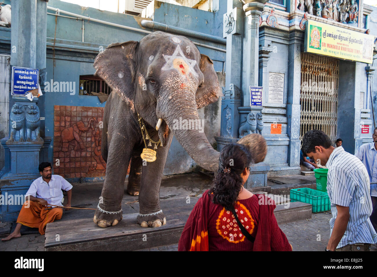 TEMPLE ELEPHANT SRI MANAKULA  VINAYAGAR  PONDICHERRY  INDIA THE ELEPHANT BLESSES THE MAN BY TOUCHING HIS HEAD WITH - Stock Image