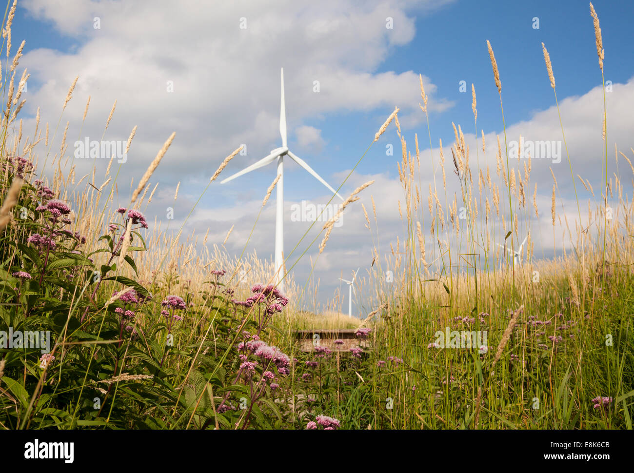 Flowers and grasses frame wind turbines in the background on a sunny day. Grey County, Ontario, Canada. Stock Photo