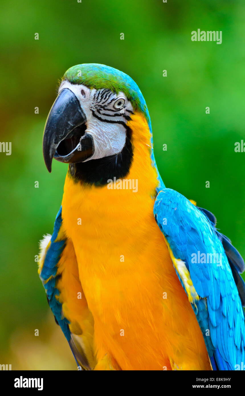 Blue Bird Names >> Close Up Colorful Birds Blue And Gold Macaw Scientific Name