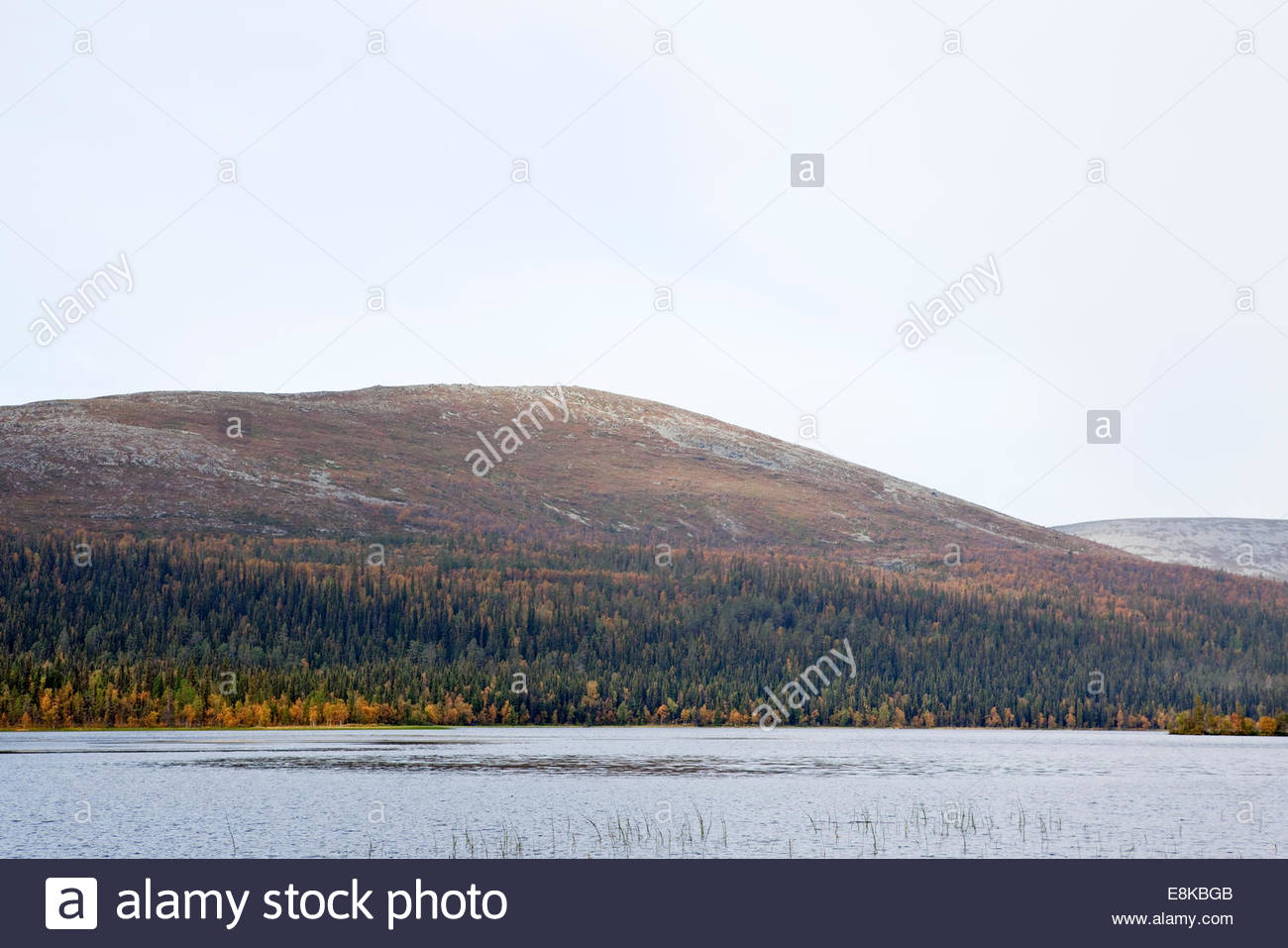 Fell at Finnish Lapland in fall - Stock Image