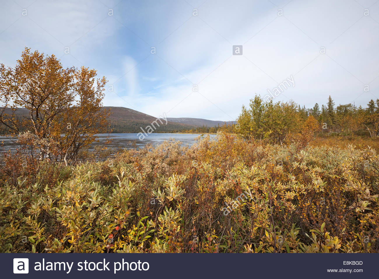 Sunny fall day on a meadow in Lapland - Stock Image