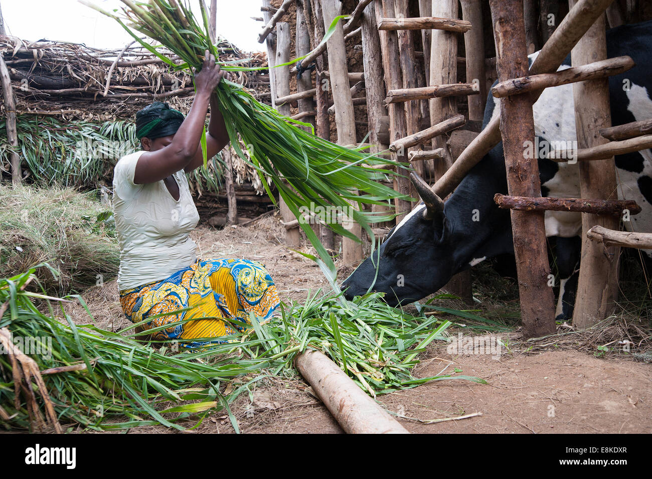 RWANDA, NYAMAGABE: Marie Mukadera lives in one of the poorest districts of Rwanda. She has a small house and a piece - Stock Image