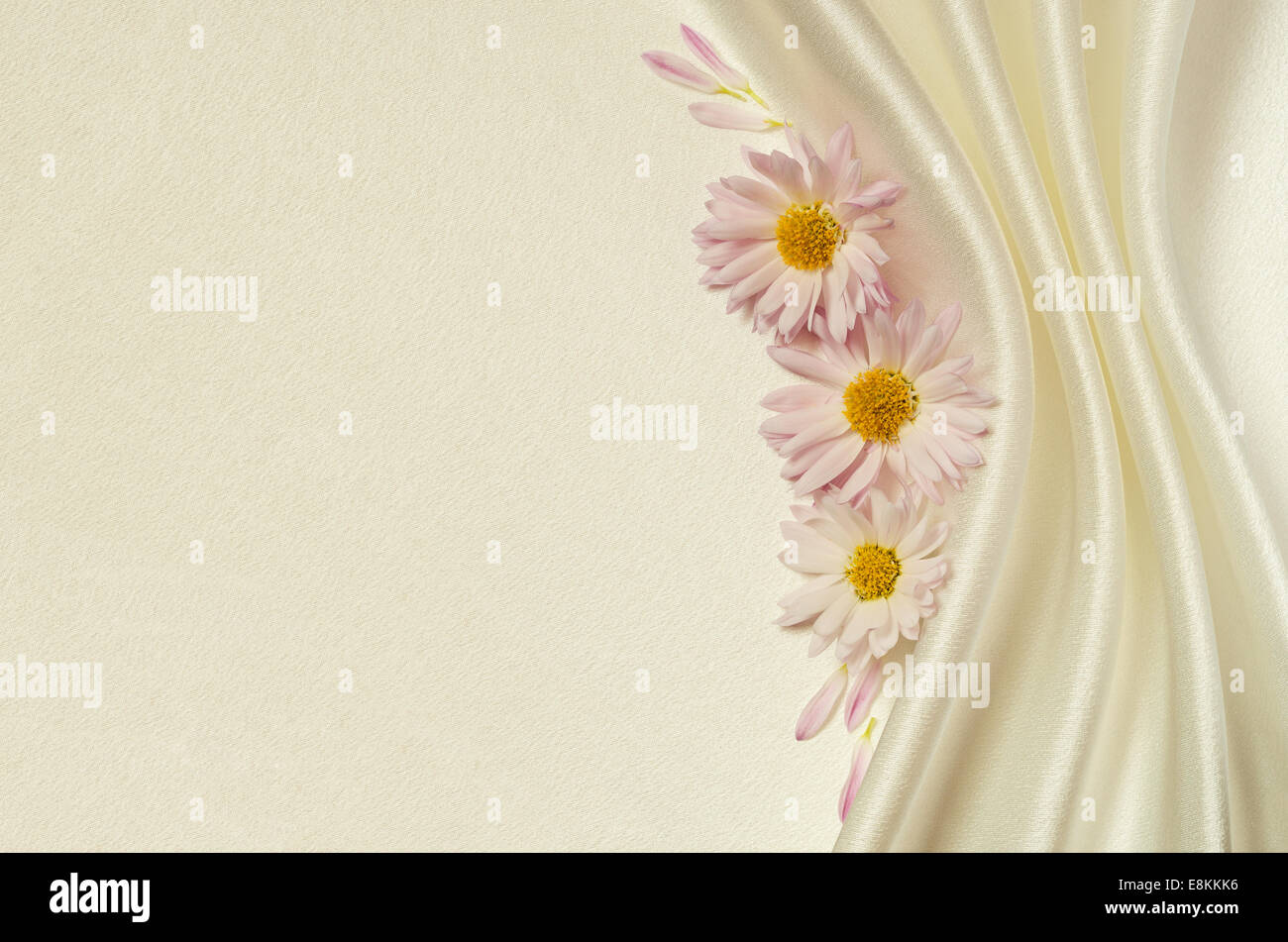 White satin background with asters and folds - Stock Image