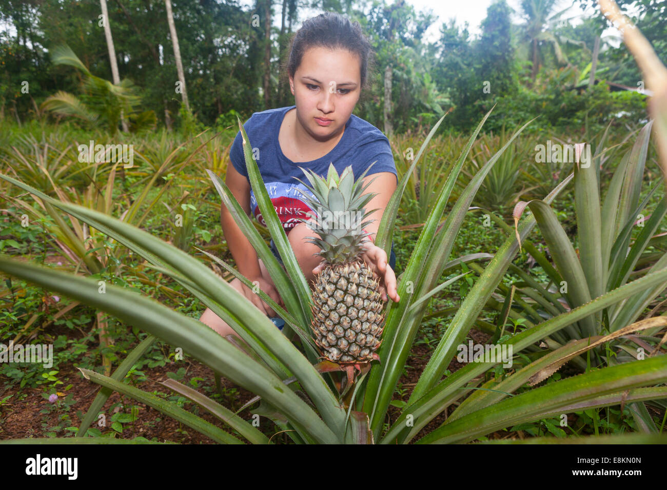 Girl, about 16 years, reaching for a Pineapple (Ananas comosus), plant, Western Province, Sri Lanka - Stock Image