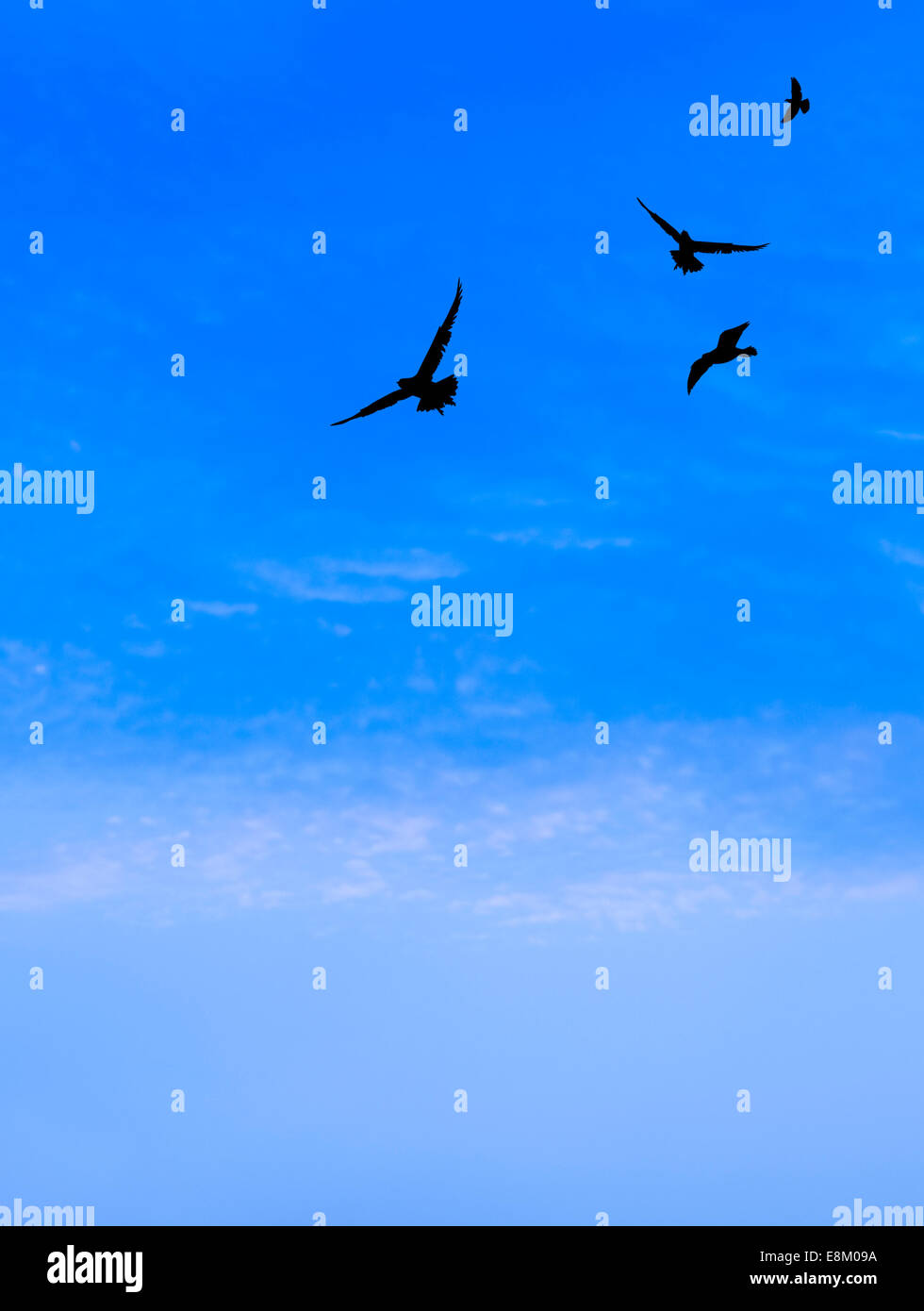 birds flying with cloudy blue sky at dawn - Stock Image