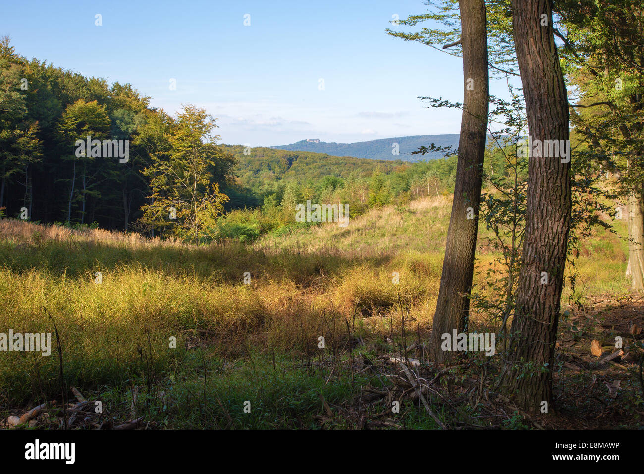 belated summer forest in Little Carpathian - Slovakia - Stock Image