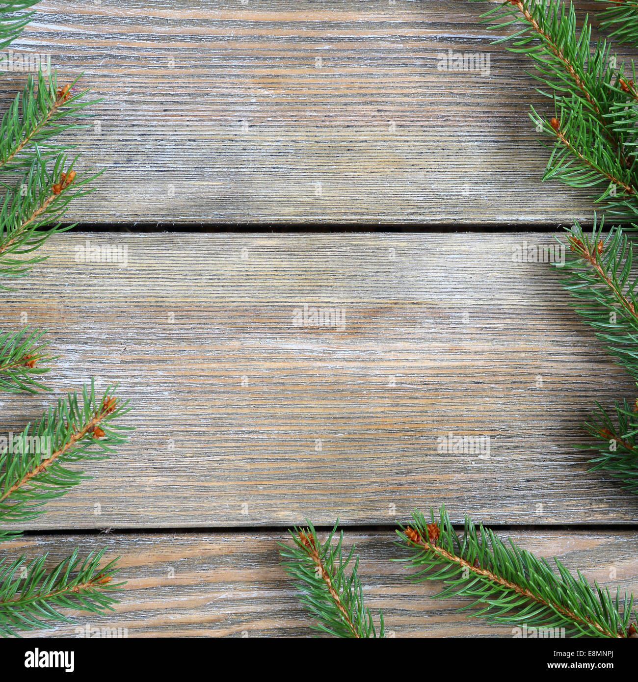 Christmas frame with pine branch on wooden boards, xmas background - Stock Image