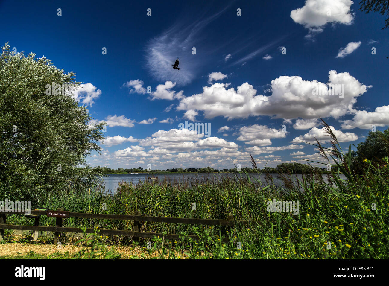 Sunny day, trees surround a lake. Sign says no swimming. Stock Photo