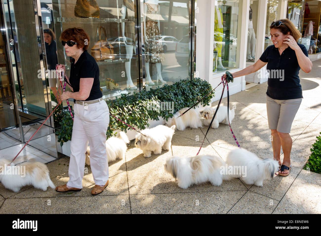 Palm Beach Florida Worth Avenue shopping woman dog walker Stock Photo