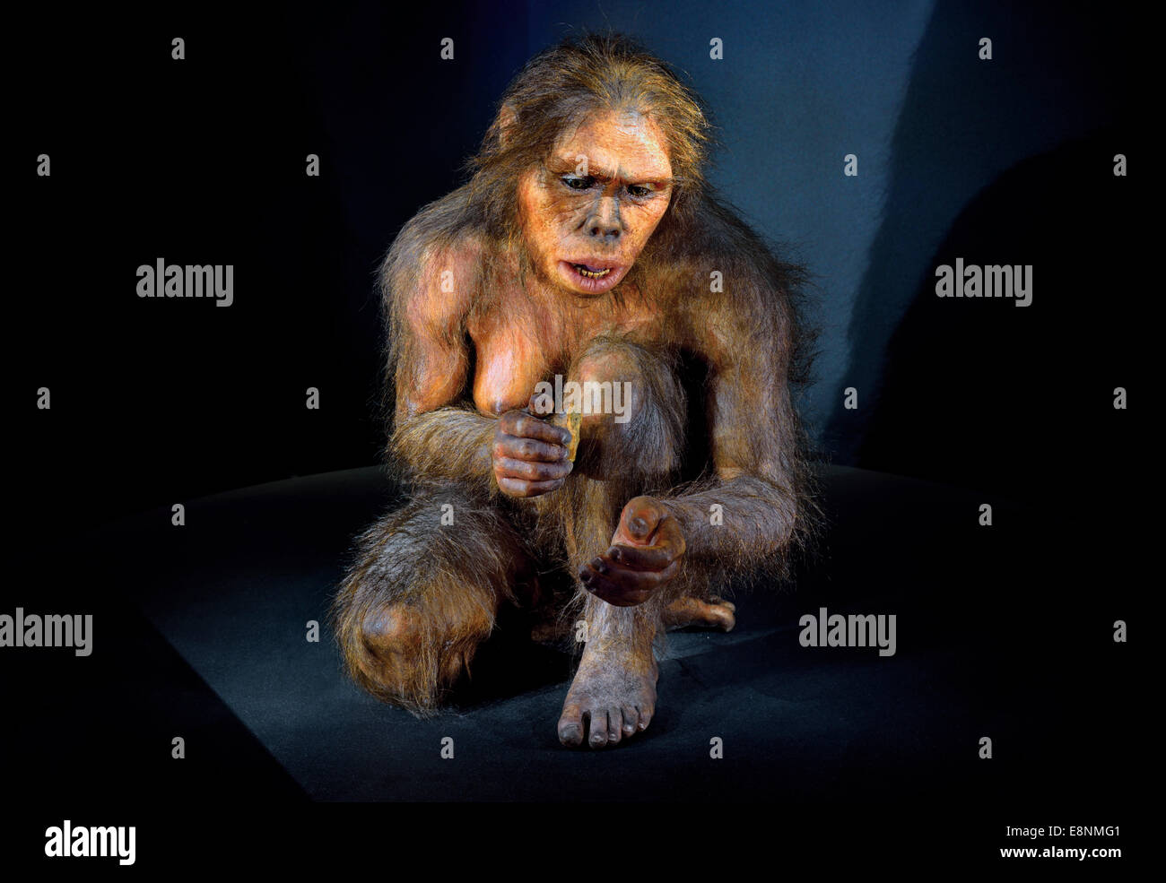 Spain, Burgos: Hominid 'Lucy' (Australopithecus afarensis) in the Museum of Human Evolution - Stock Image