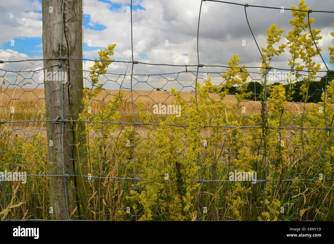 Wire fence and post in rural landscape with wildflowers - Stock Image