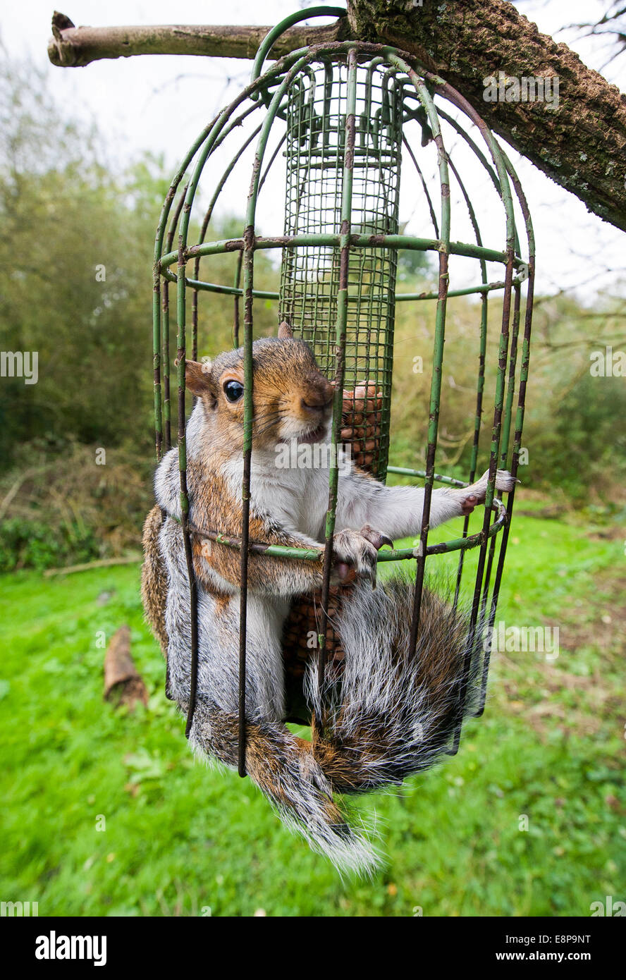 with proof blogs bird squirrel squirrelproof problem slacktivist to another feeders feeder how