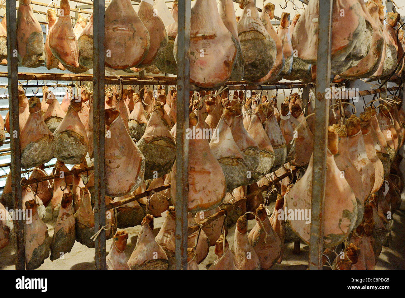 France, Pays Basque, Atlantic Pyrenees, Hasparren, drying Bayonne ham at the master butcher Louis Ospital - Stock Image