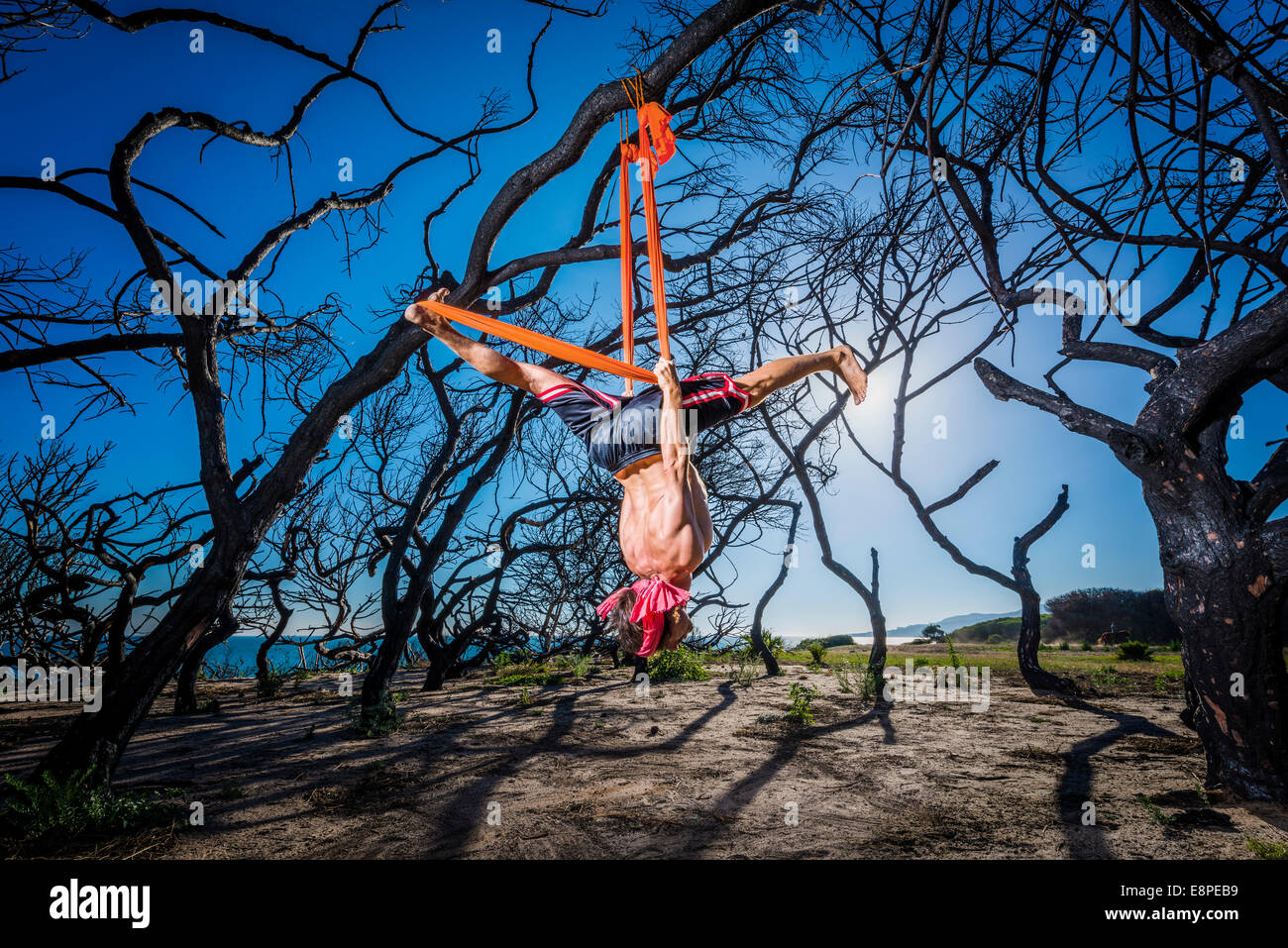 Aero Yoga. Man hanging from a tree and stretching. - Stock Image