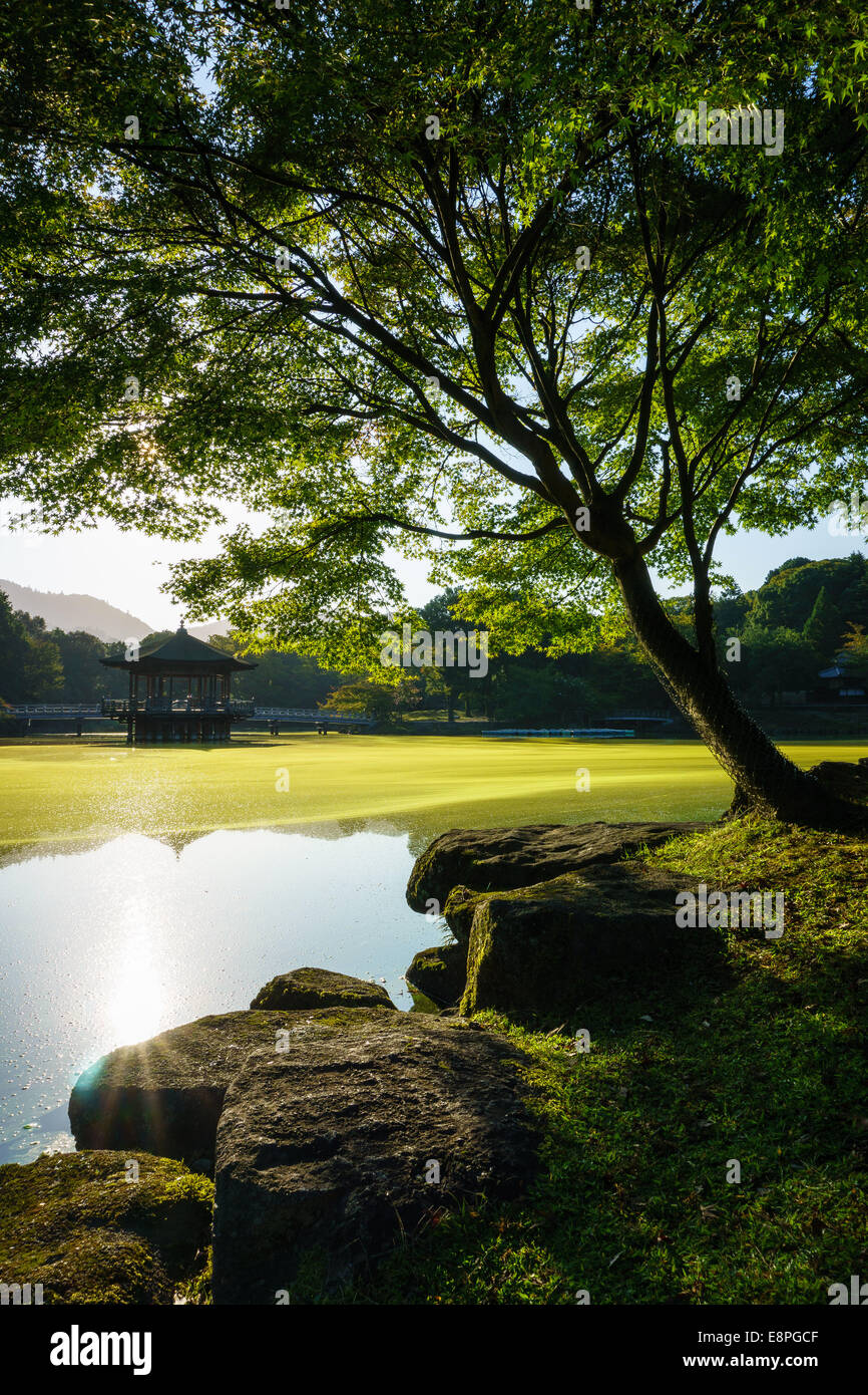 September dawn at Sagi Ike Pond in Nara, Japan - Stock Image