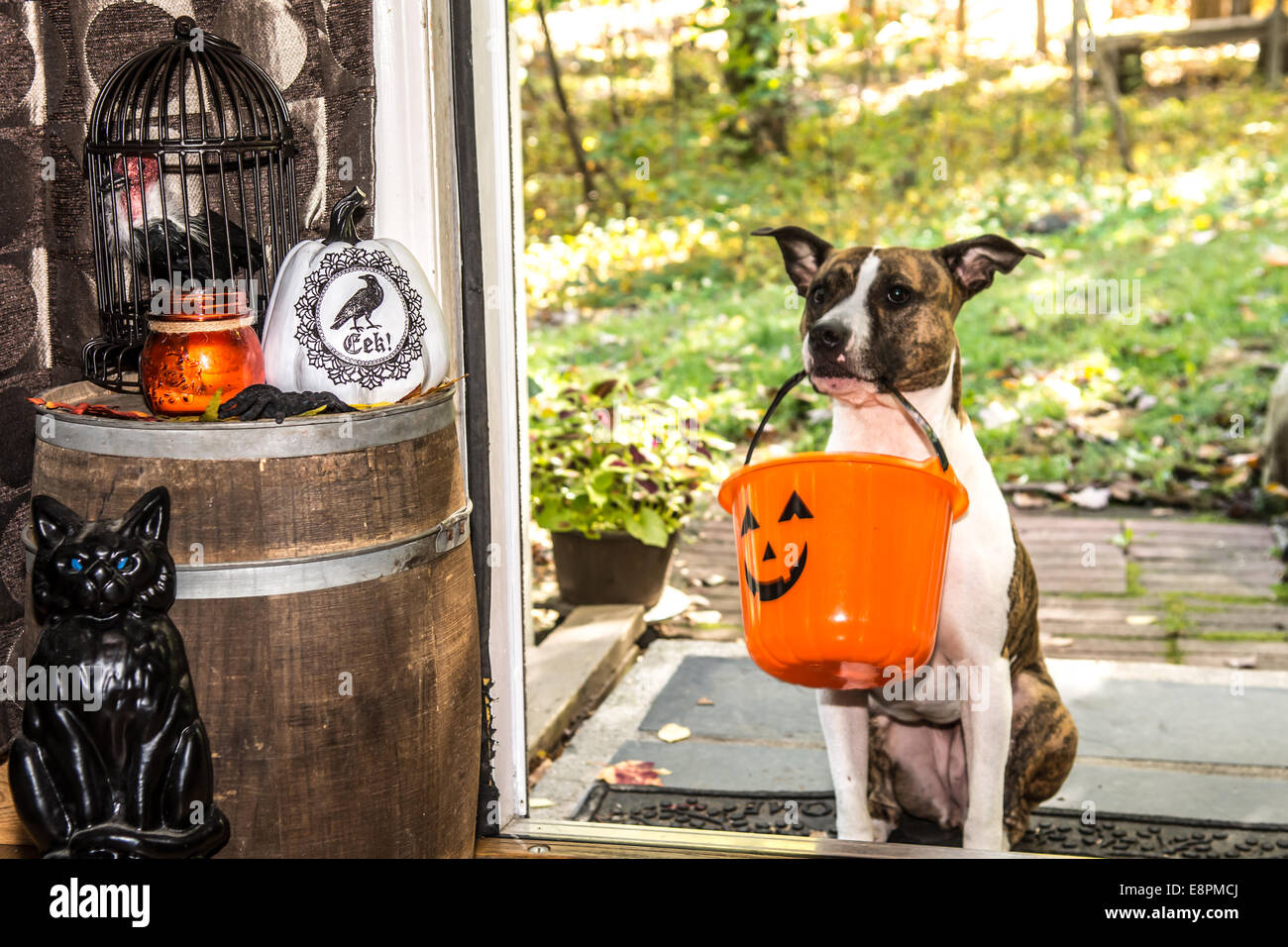 Dog Trick or Treating - Stock Image