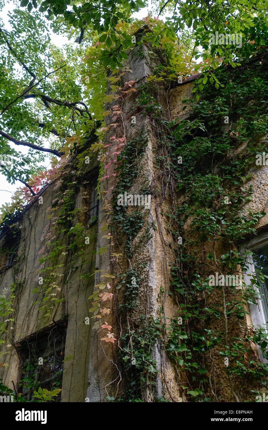 chimney at one overgrown with wine old rundown house - Stock Image