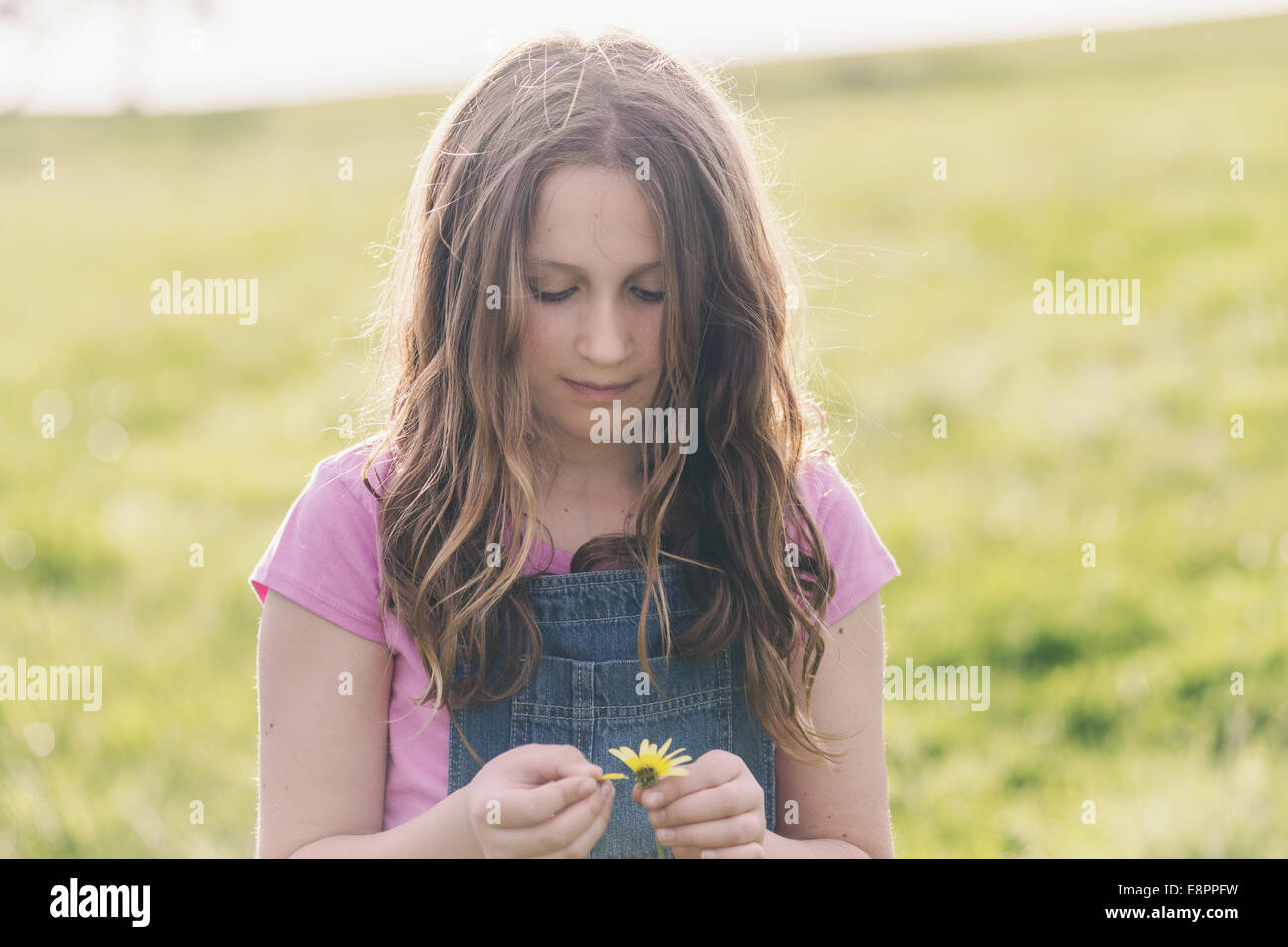 tween girl with daisy making a wish, looking down, in a green field - Stock Image