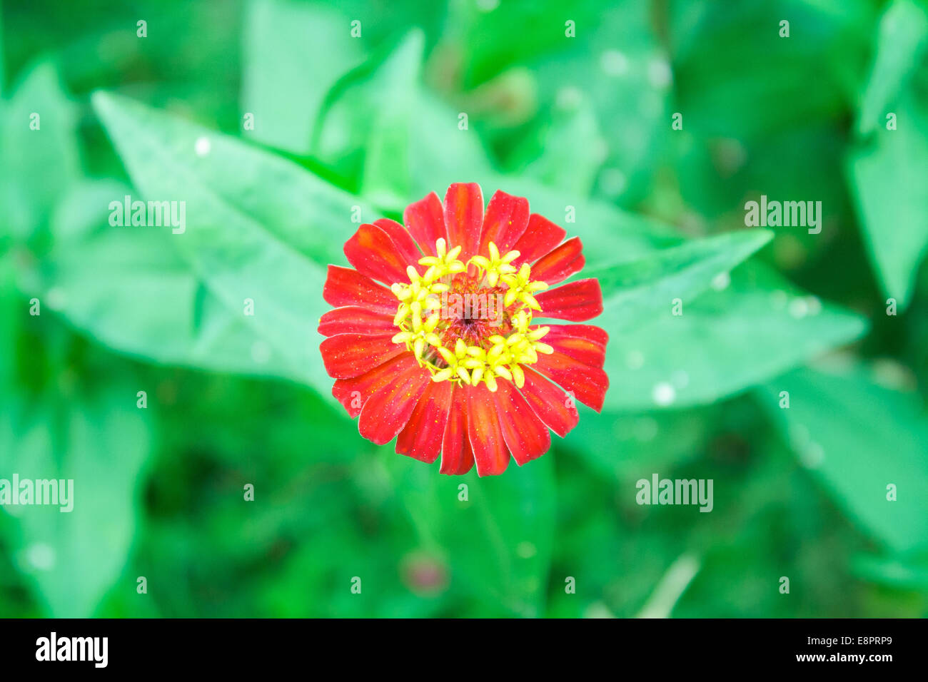 Collection Colorful Gerbera Marigold Flowers Stock Photos