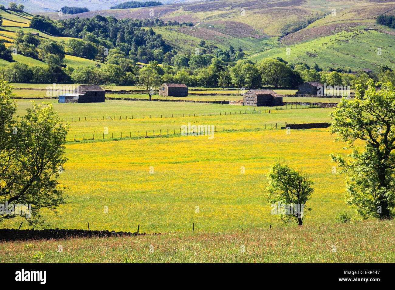 Raydale in the Yorkshire Dales National Park. - Stock Image
