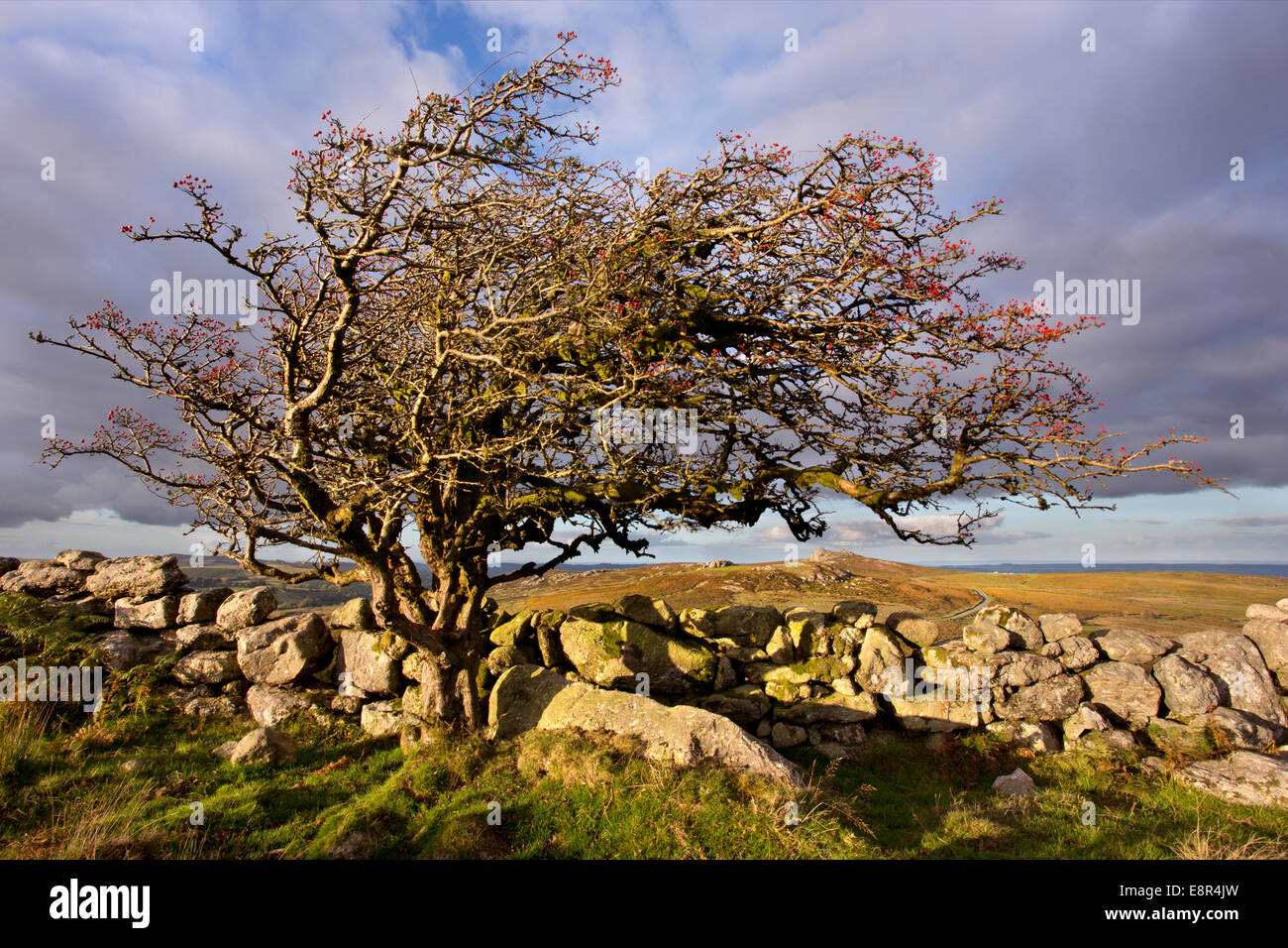 View towards Haytor in Dartmoor National Park, Devon, England - Stock Image