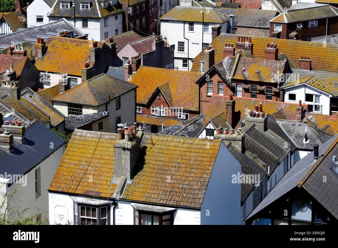 Lichens growing on roof tiles turn house roofs an untypical glowing tawny colour. Hastings Old Town, East Sussex. - Stock Image