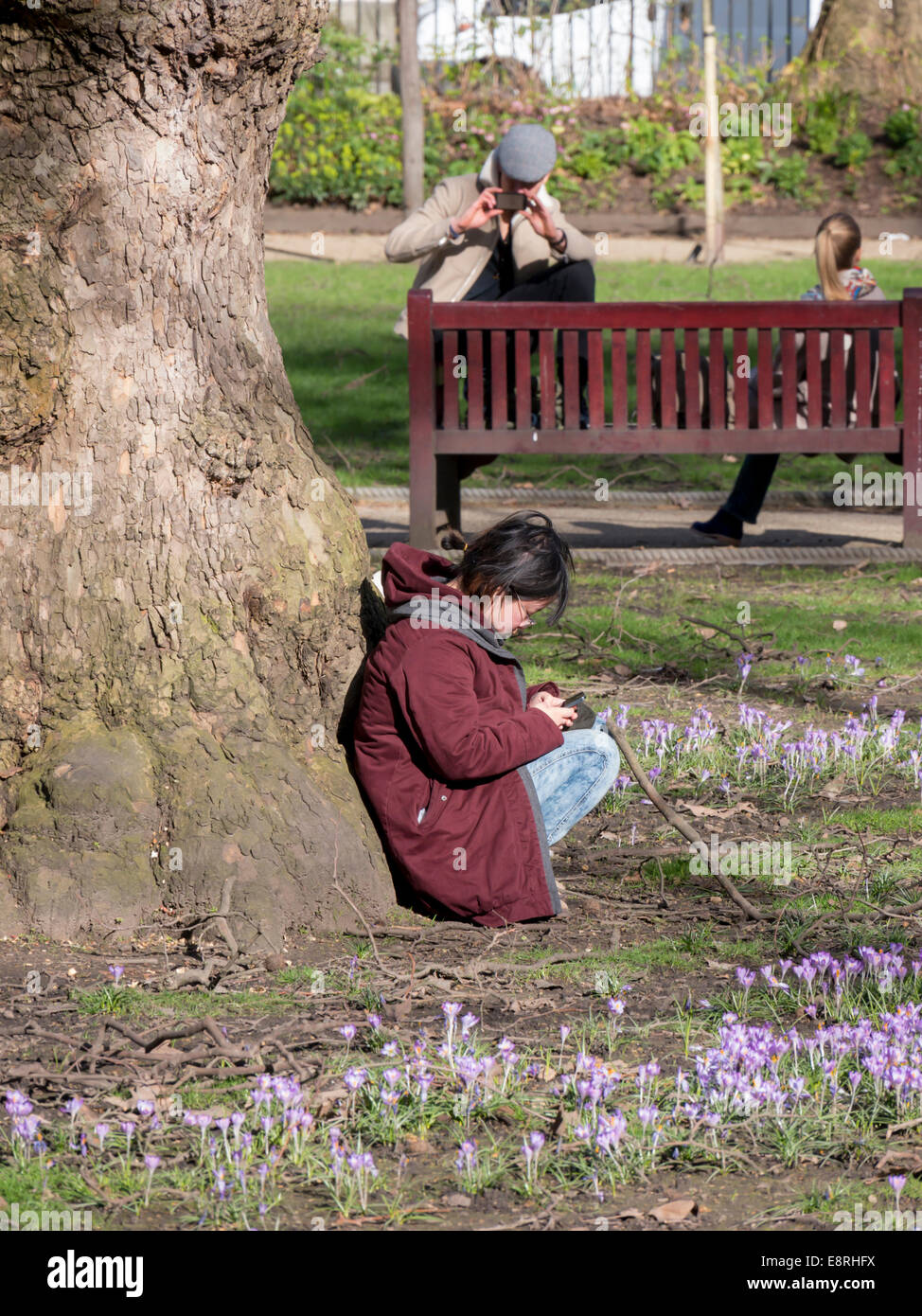 europe, UK, England, London, Tavistock Square - Stock Image