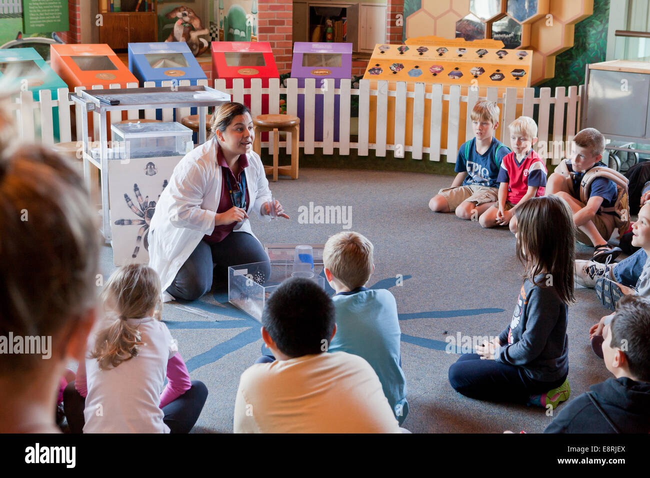 Children gathered around a biologist demonstrating tarantula feeding behavior - Smithsonian Institution Natural - Stock Image