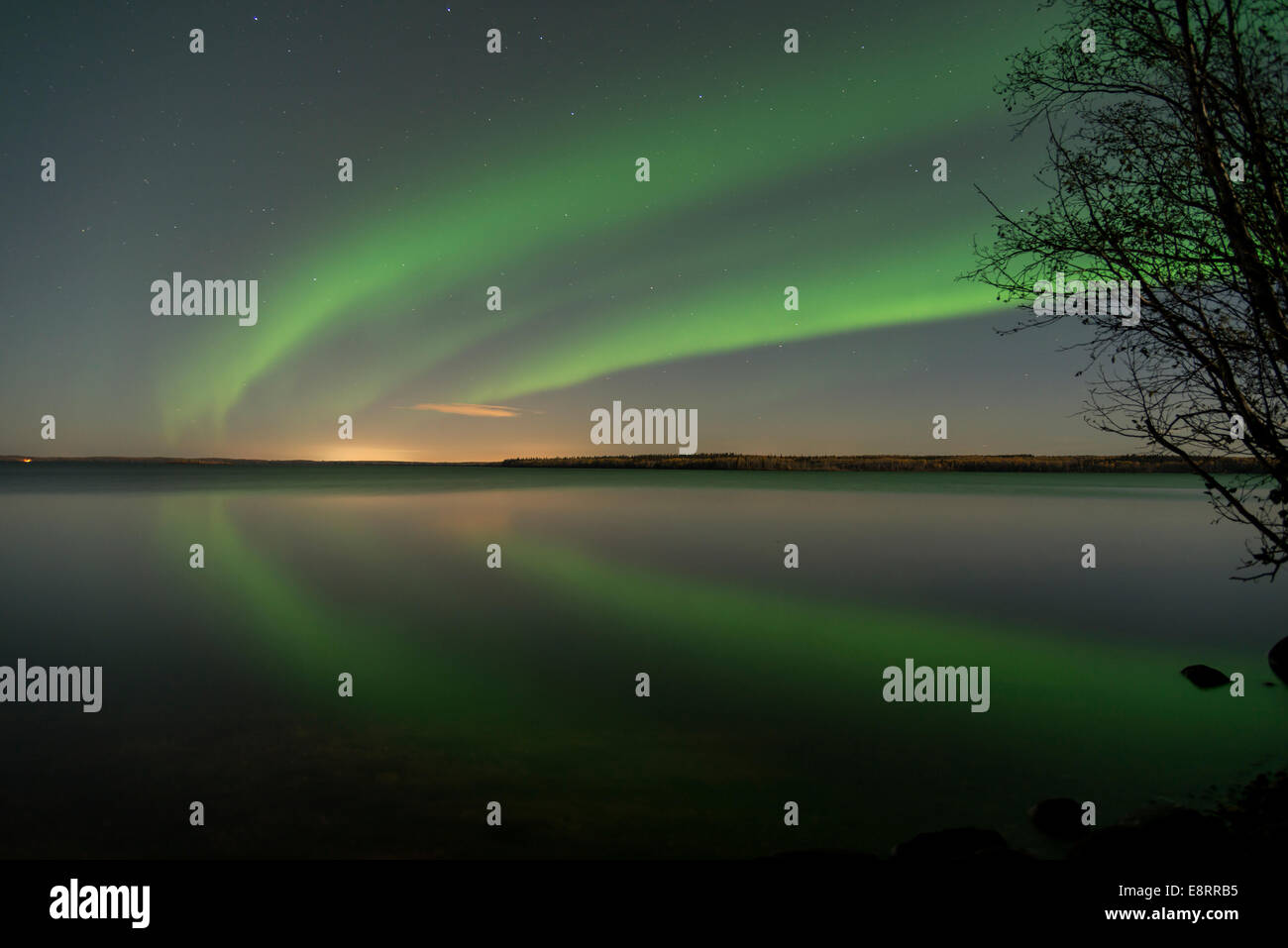 Norther lights with a reflection in the water with a silhouette of a tree. - Stock Image