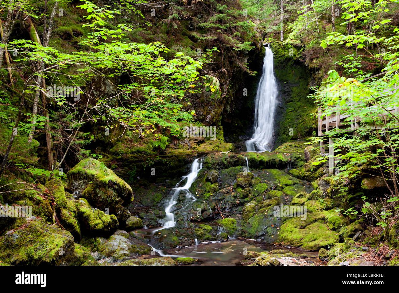 Dickson Falls Trail - Fundy National Park - near Alma, New Brunswick, Canada - Stock Image