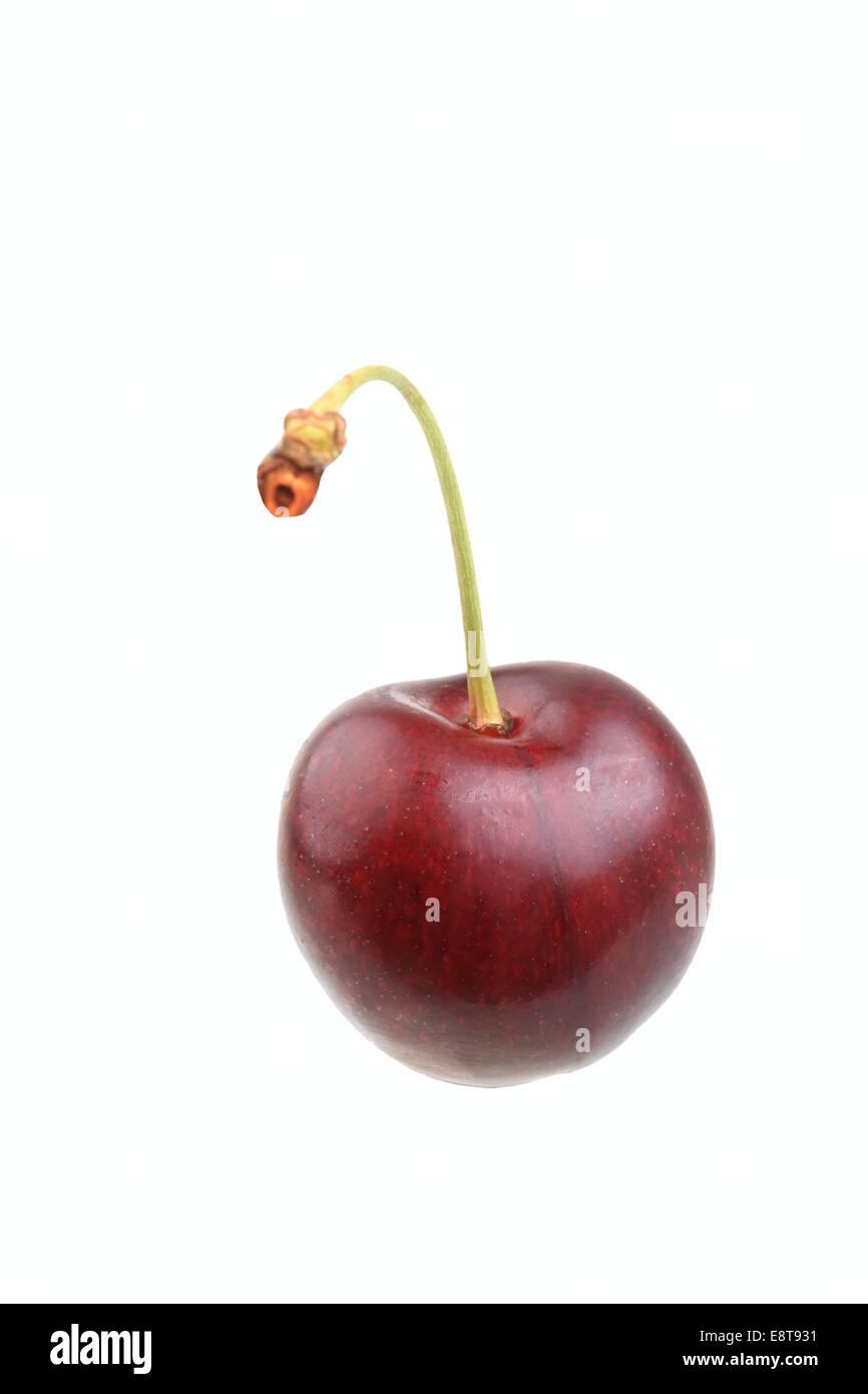 Sweet cherry of the Große Schwarze Knorpelkirsche variety - Stock Image