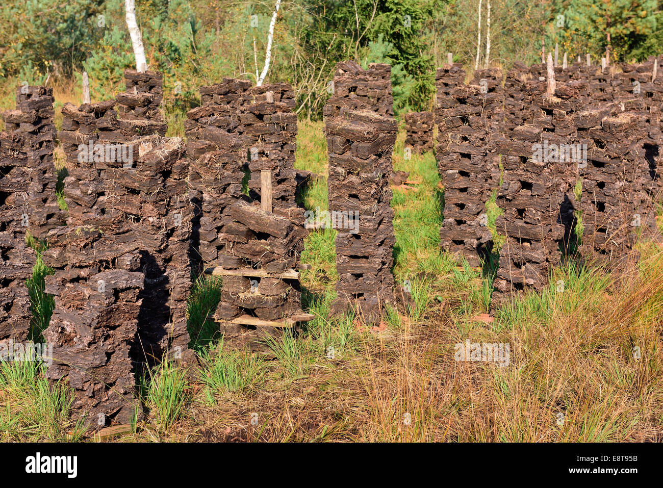 Stacks of peat sods left or drying in the traditional manner, Grundbeckenmoor Rosenheim, near Raubling, Upper Bavaria, - Stock Image