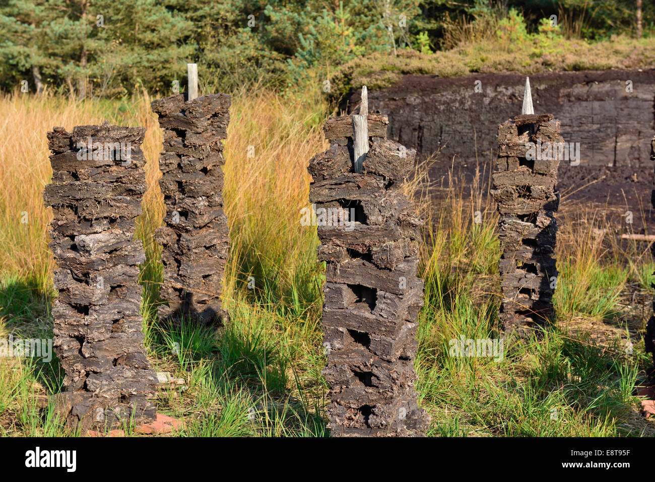 Stacks of peat sods left or drying in the traditional manner, Grundbeckenmoor Rosenheim, near Raubling, Upper Bavaria, - Stock Image