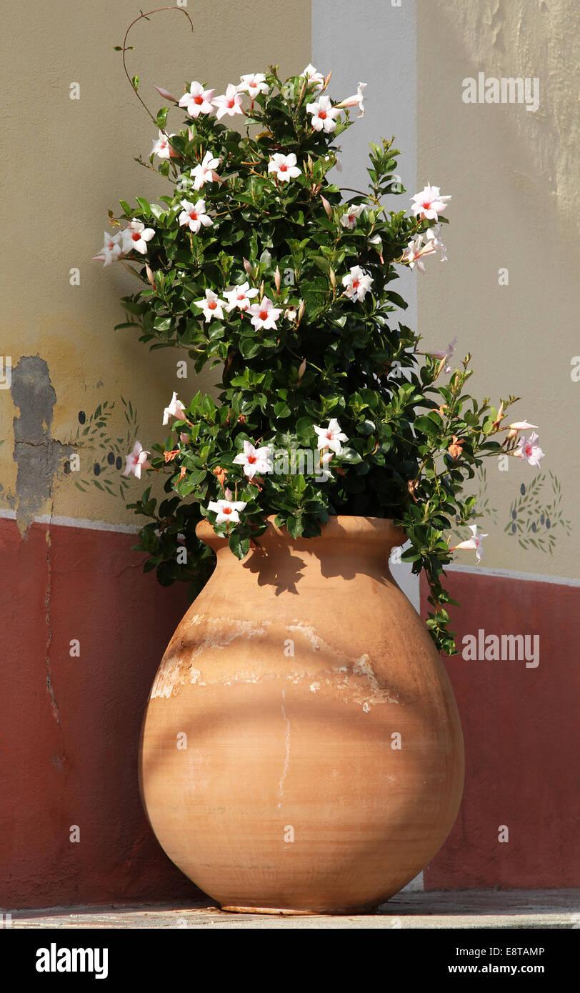 Flowers in an earthenware pot. - Stock Image