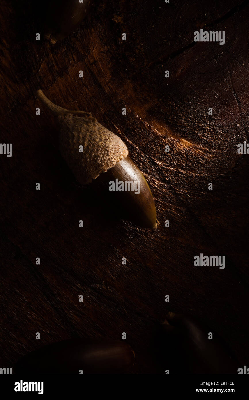 Acorn on Wooden Surface, Low Key - Stock Image
