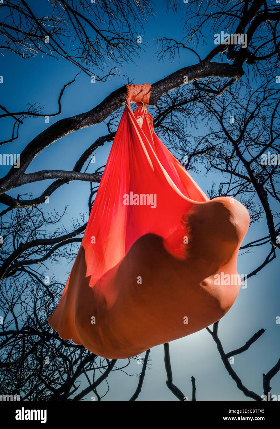 Aero Yoga. Man stretching from a tree. - Stock Image