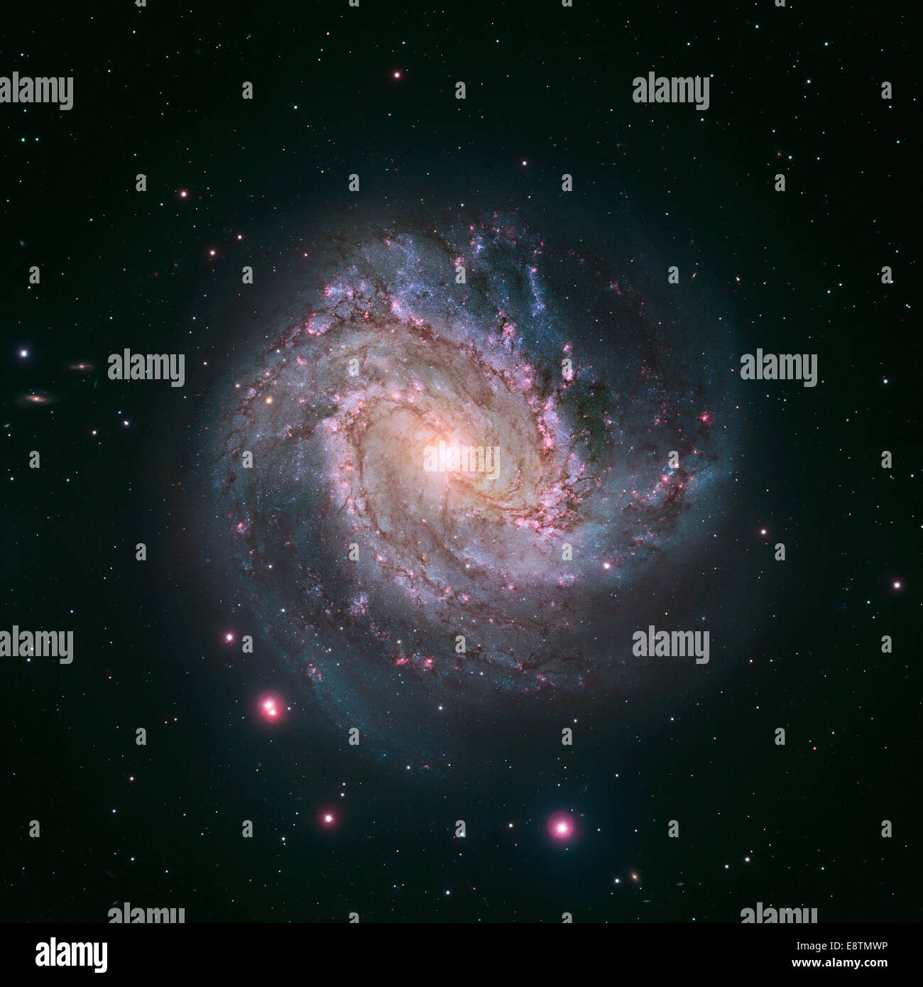 JANUARY 9, 2014: The vibrant magentas and blues in this Hubble image of the barred spiral galaxy M83 reveal that - Stock Image